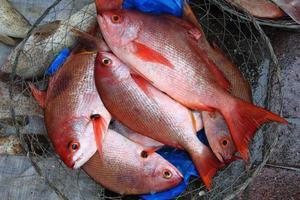 pescato fresco foto