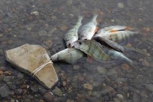 pesca foto