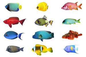 spaziali dell'indice dei pesci foto
