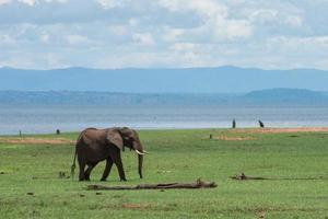 elefante al parco nazionale di matusadona, Zimbabwe foto