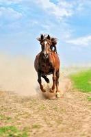 cavallo foto