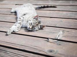 gatto di tabby pigro che si distende su un legno, colori morbidi foto
