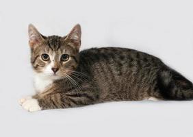 gattino a strisce e bianco che si trova sul gray foto