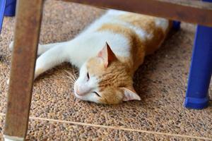 carino gattino domestico guardando in alto foto