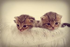 gattini foto