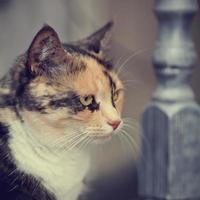ritratto di un gatto di un colore multicolore.