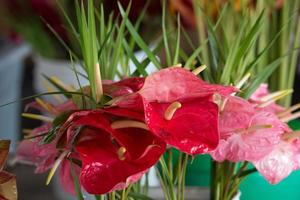 anthurium andreaenum in un mercato foto