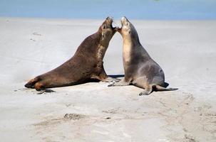 Australia, animali foto