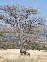 topi tra gli alberi foto