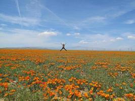 uomo che salta nel campo di fiori selvatici, antelope valley, california
