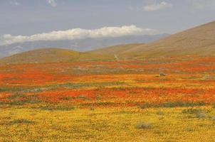 valle scenica dell'antilope in primavera foto