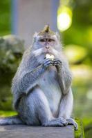 scimmia nella foresta delle scimmie