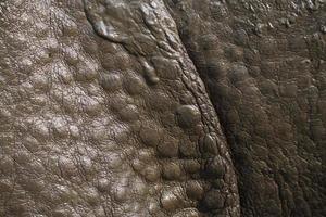 particolare della pelle di rinoceronte con un corno maggiore foto