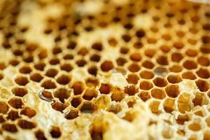 favi delle api