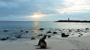 seelöwe auf den galapagosinseln foto