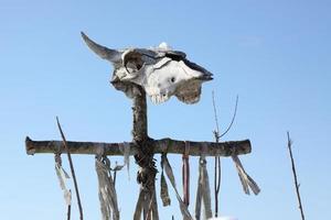 skul di mucca foto
