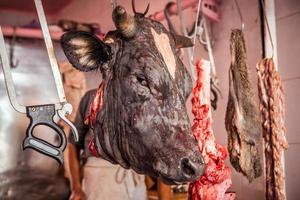testa di mucca foto