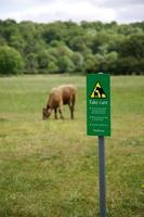 pericolo di mucca foto