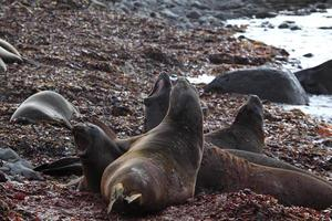 robben und seehunde in der antarktis foto
