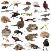 fauna selvatica europea