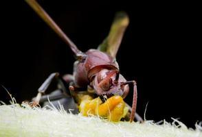 grande vespa sul ramo sottile in primavera. colpo a macroistruzione foto