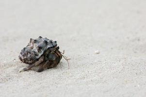 granchio eremita che cammina sulla spiaggia foto