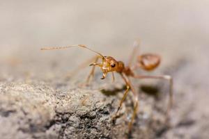 formica arancione sul muro foto
