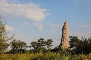 un alto tumulo di termiti domina il paesaggio della prateria foto