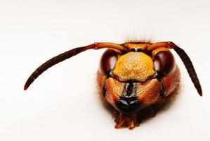 macro piccolo scarabeo foto