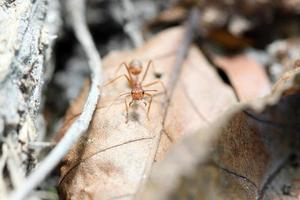 le formiche cercano cibo.