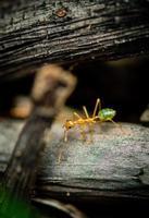 formica albero verde foto