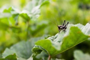 colpo a macroistruzione dell'insetto foto