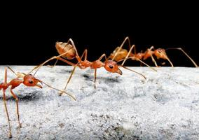 formica sul vecchio tubo