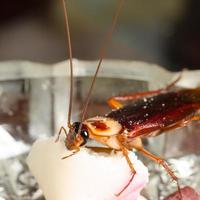 bug di scarafaggio cucina casa