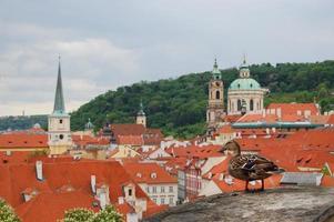 Praga. architettura medievale con un'anatra seduta in primo piano.