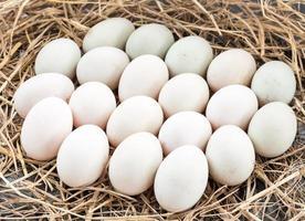 uovo di anatra sulla paglia foto