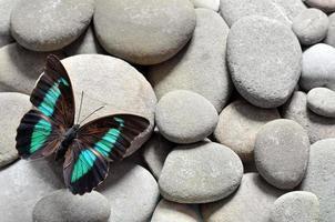 la grande farfalla sulle pietre foto