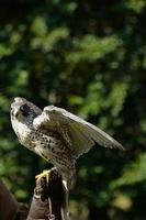 uccello, vogel