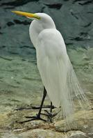 sposa dell'uccello foto