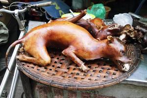 cane cotto foto