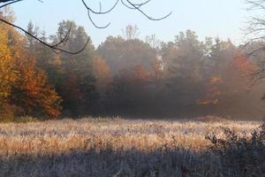 autunno nebbioso foto