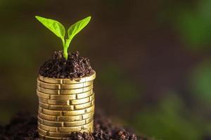 monete d'oro nel terreno con pianta giovane. foto