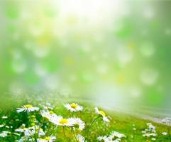 fiore foto
