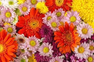 fiori foto