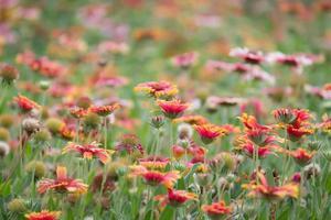 fioritura foto