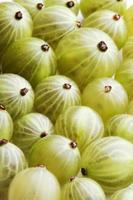 uva spina su fondo bianco - colpo dello studio foto