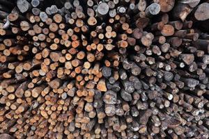 legno di mangrovia da lavorare come carbone foto