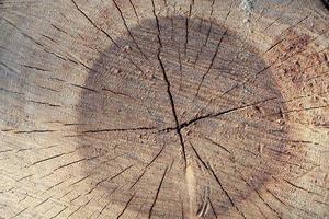 attraversa la sezione dell'albero foto