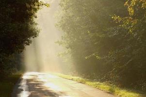 strada di campagna nebbiosa all'alba