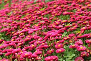 angolo dei fiori foto